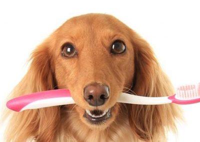 limpieza-dental-perros-2018