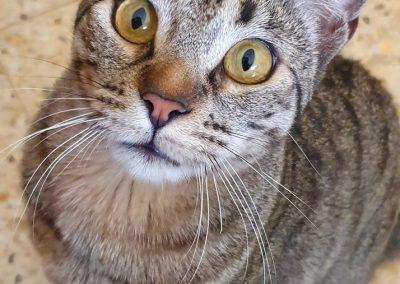 gatos-barcelona-8